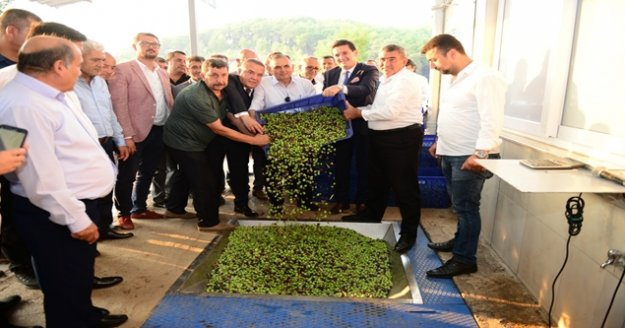 Zeytinyağı fabrikasında sezon açılışı
