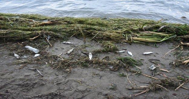 Antalya'da ölü balıklar sahile vurdu