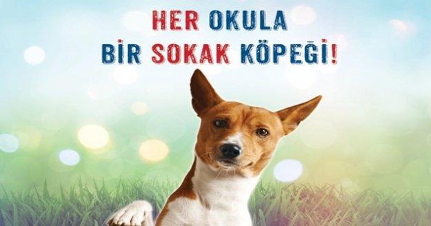 """'Her okula bir sokak köpeği"""" projesi"""