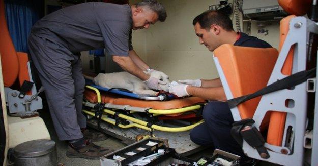 Yaralı ve bakıma muhtaç sokak hayvanları için 7/24 ambulans hizmeti