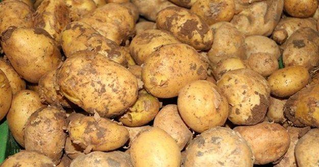 Patateste ihracat ön izne bağlandı