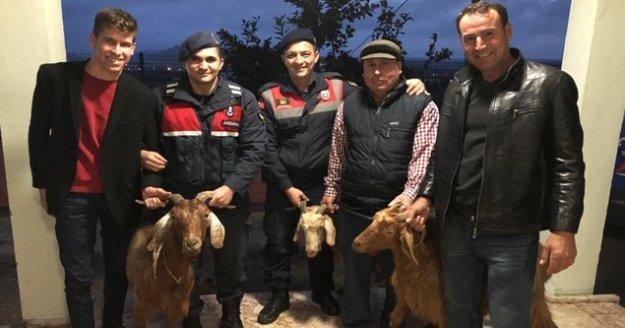 Arazide otlayan keçileri çaldılar