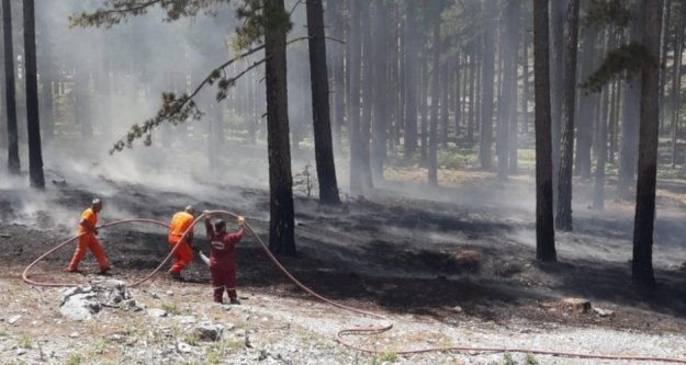 Alanya'da korkutan orman yangını