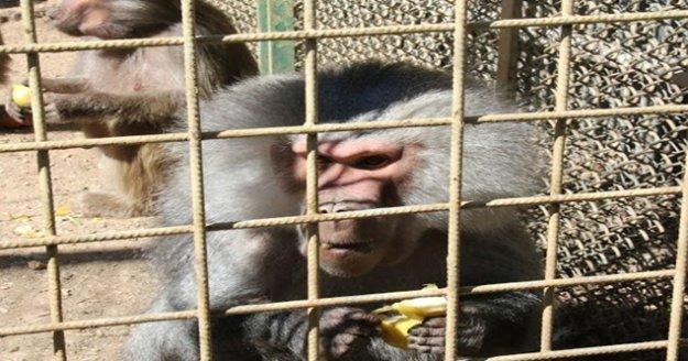 Ziyarete açılan Hayvanat Bahçesinin yeni sevimli dostları