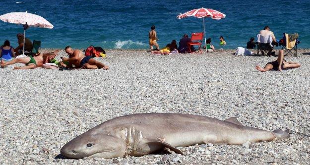 Plajda tatilcileri korkutan kare