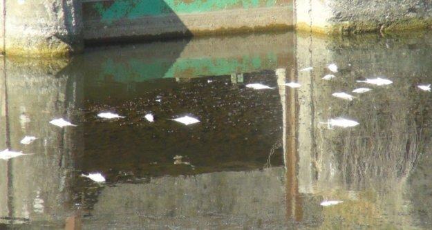 Tahliye kanalında balık ölümleri