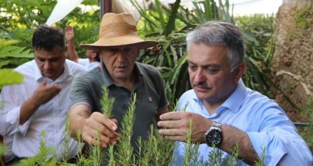Gazipaşa tropikal meyve üretiminde çığır açacak