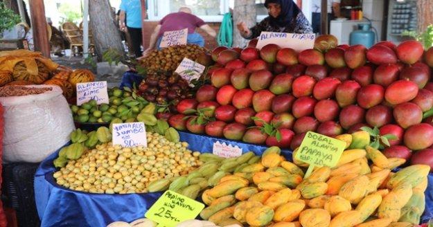 Alanya'da tropik meyveler fiyatlarıyla dudak uçuklatıyor