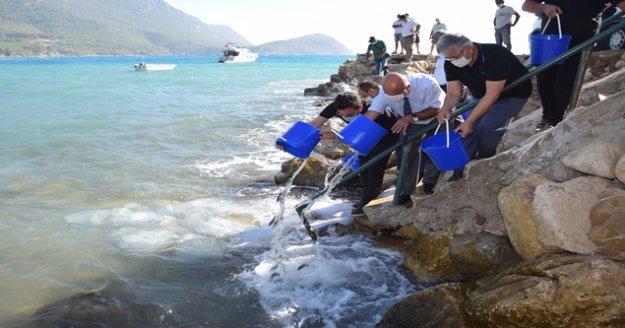 5 bin levrek yavrusu denizle buluştu