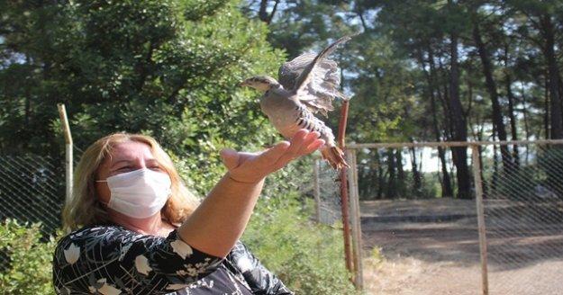 240 Kınalı Keklik doğaya salındı