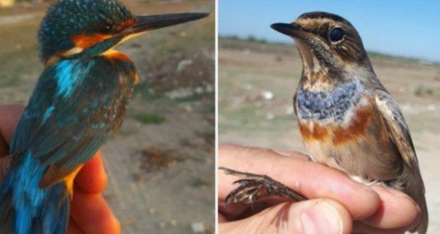 60 civarında kuş türünden 1000'e yakın kuş halkalandı