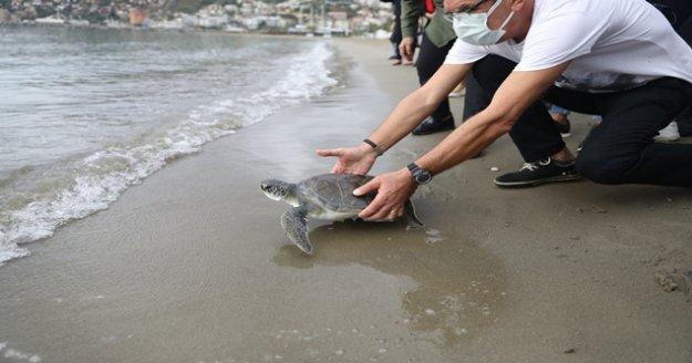 Alanya'da tedavisi tamamlanan yeşil deniz kaplumbağası denize bırakıldı