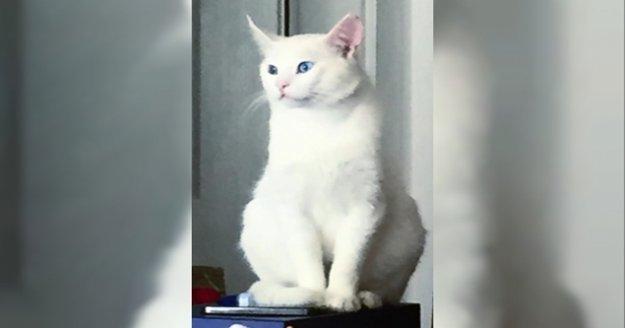 Alanya'da bu kediyi bulana para ödülü!