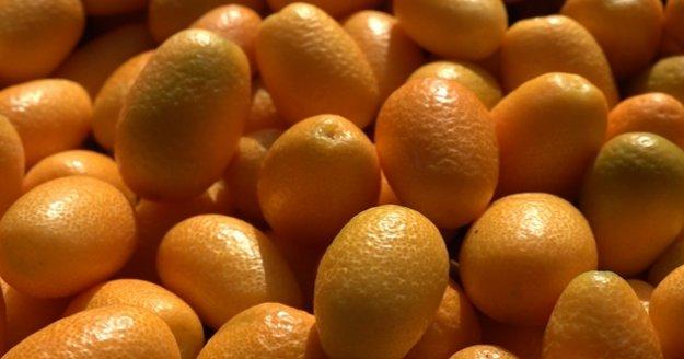 Alanya'da Altınportakal olarak bilinen Kamkat meyvesi üreticinin yeni gözdesi