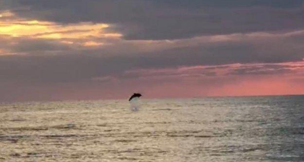 Alanya'da turistlerin çekildiği sahiller yunuslara kaldı