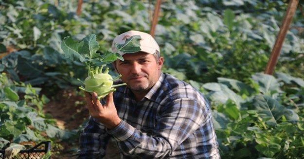 Alanya'da şifası saymakla bitmeyen alabaş hasatı başladı
