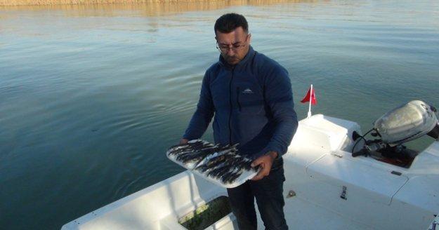 Amatör balıkçılar da balon balığı desteği istiyor