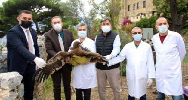 Başkan Yücel tedavisi tamamlanan kartalı doğaya saldı