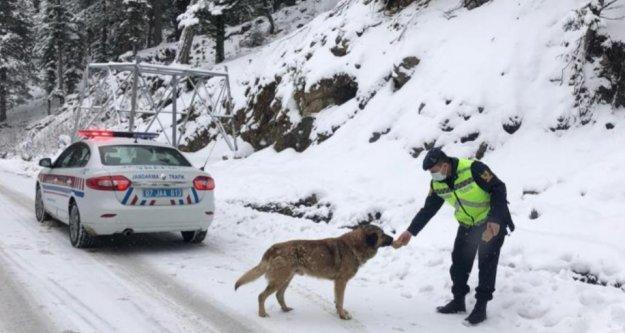 Alanya'da jandarmadan sokak hayvanlarına yiyecek