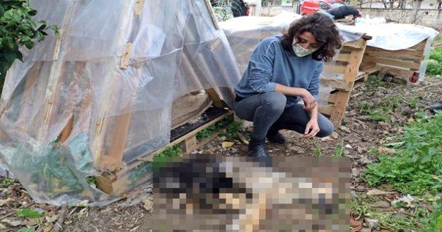 Her akşam beslediği yavru köpekleri bir gün beslemedi, sabah geldiğinde ölüleriyle karşılaştı