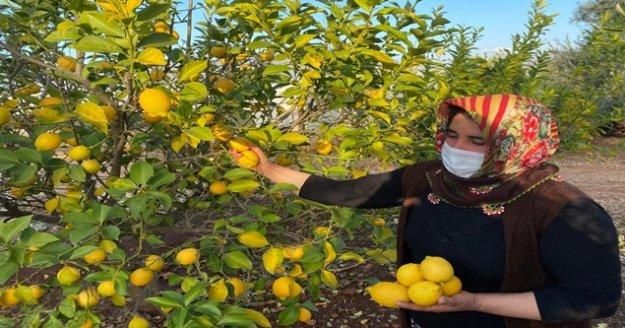 Kadın çiftçiler kısıtlamada da üretime devam etti
