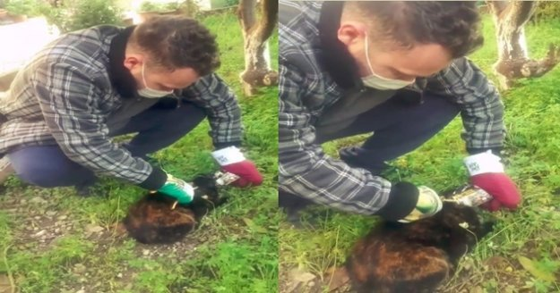 Konserve kutusuna kafasını sıkıştıran kediyi bahçe makasıyla kurtardı