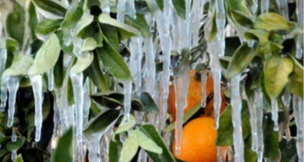 Meteoroloji'den Alanya için don uyarısı geldi