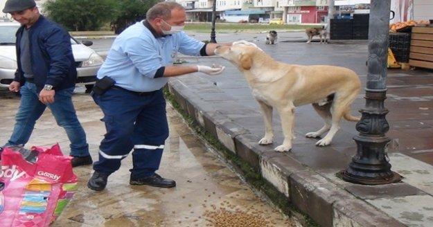 Sokağa çıkma kısıtlamasında sokak hayvanları unutulmadı