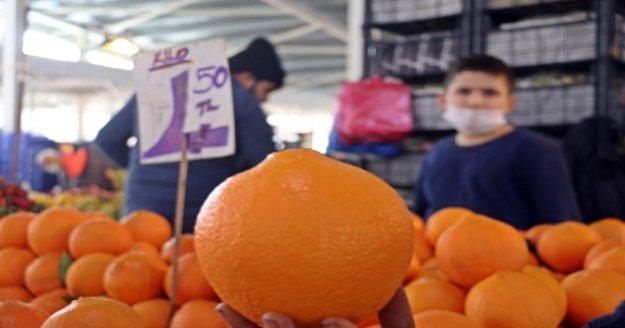 Aşırı sıcaklar 'Washington' portakalını üç kat büyüttü