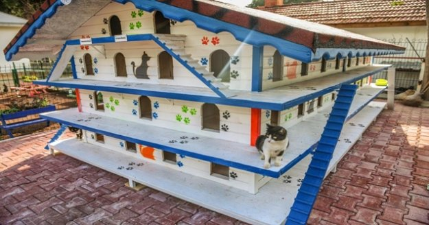 DokumaPark'a kedi apartmanı