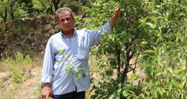 Yakınlarının kayıp ihbarı yaptığı adam, zeytin ağacında asılı halde bulundu