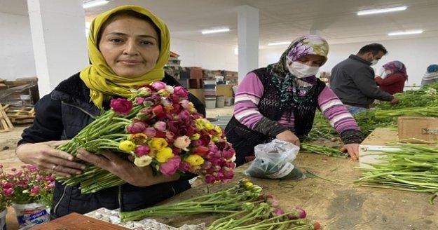 Cebinde getirdiği hediye tohumla Antalya'da üretime başladı, taleplere yetişemiyor