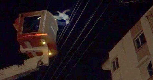Elektrik teline takılan tavuk AEDAŞ ekiplerince kurtarıldı