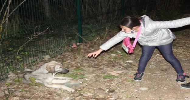 """Küçük kızın hasta köpeğin başındaki 'ne olur ölmesin"""" diye ağlayışları yürekleri burktu"""