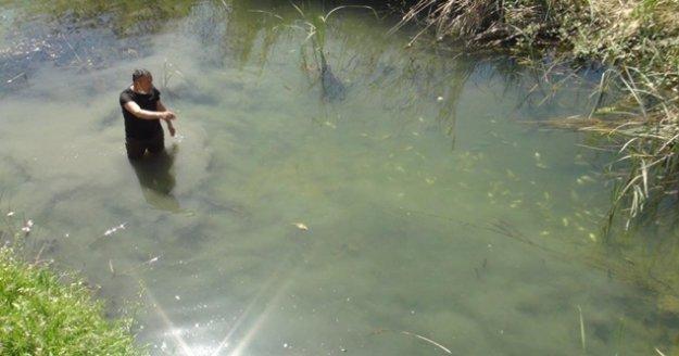 Su kanalındaki çok sayıda balık telef oldu