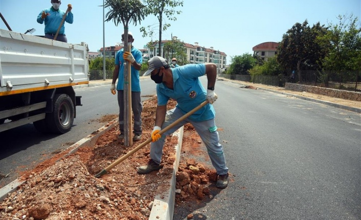 Alanya Hayri Doğan Caddesi ağaçlandırılıyor