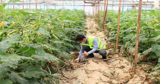 Çiftçinin toprağı analiz ediliyor