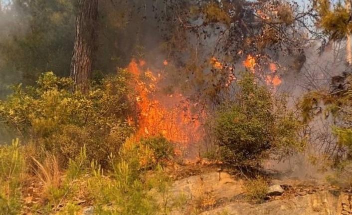 Alanya'da yangın paniği