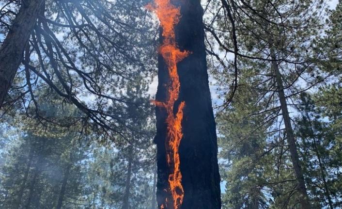 Alanya'yı korkutan yangın büyüyor