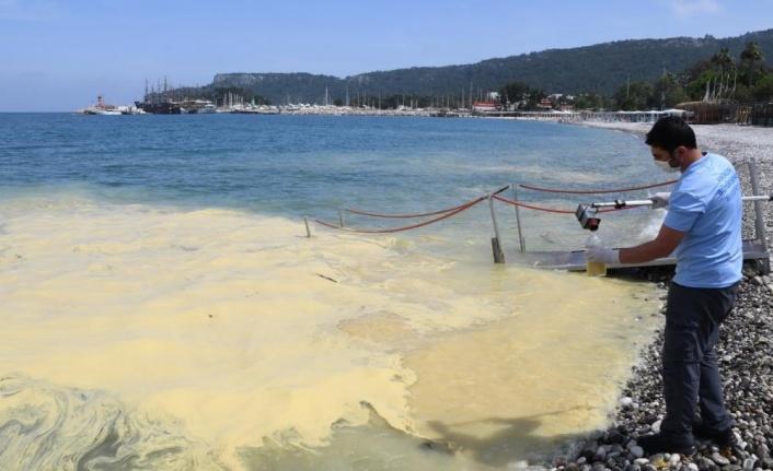 Deniz yüzeyindeki sarı tabakanın nedeni belli oldu