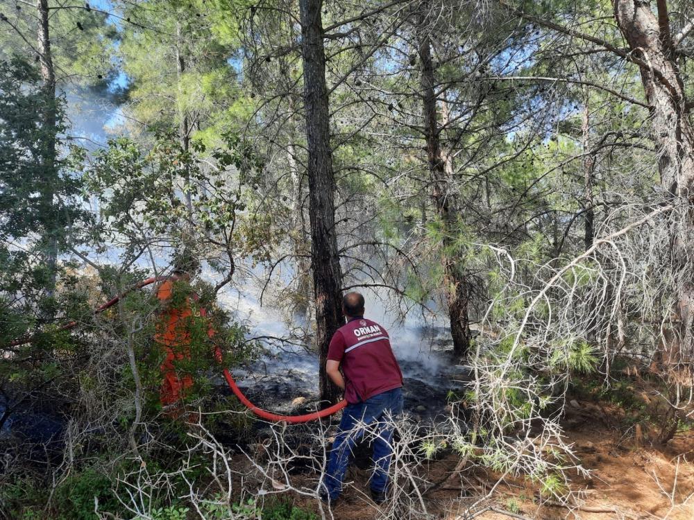 Domuz gelmesin diye yakıldığı iddia edilen ateş ormanı yaktı
