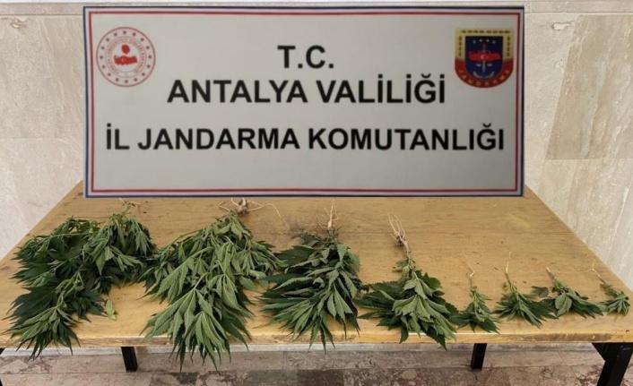 Jandarma'dan Hint Keneviri baskını