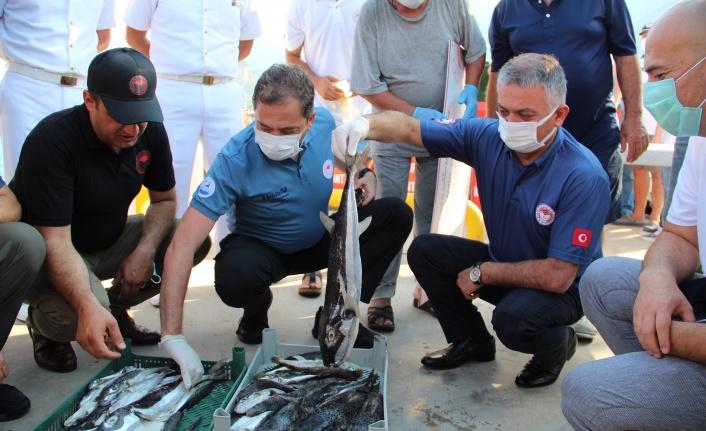 3 yılda 16.5 milyon anaç balon balığı yakalanacak