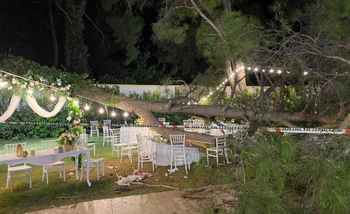 Antalya'da düğün sırasında ağaç devrildi: 1 ölü, 7 yaralı