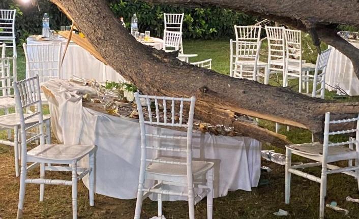 Antalya'da kır düğününde ağaç devrildi: 1 ölü, biri ağır 9 yaralı