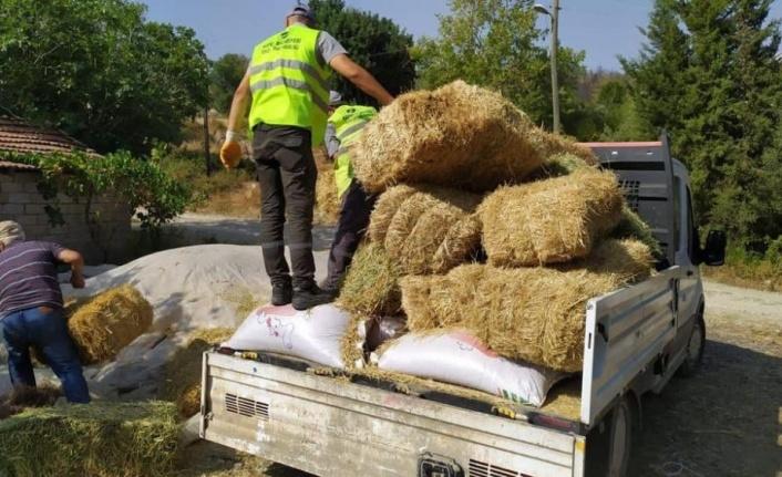 Afetzede besiciler için Kepez'den yem ve saman desteği