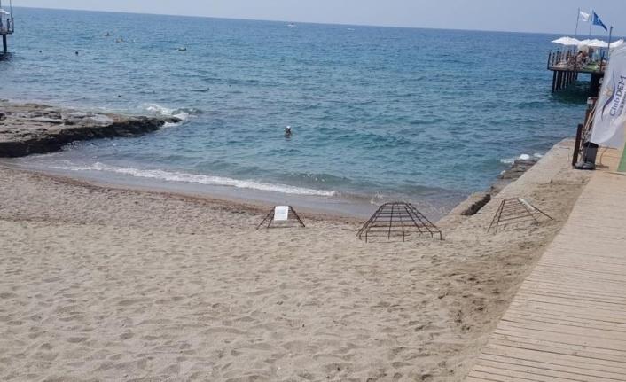 Alanya'da caretta carettalar denizle buluştu