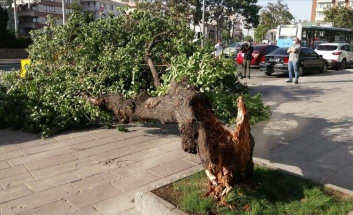 Alanya'da fırtına ağacı devirdi, araç altında kaldı