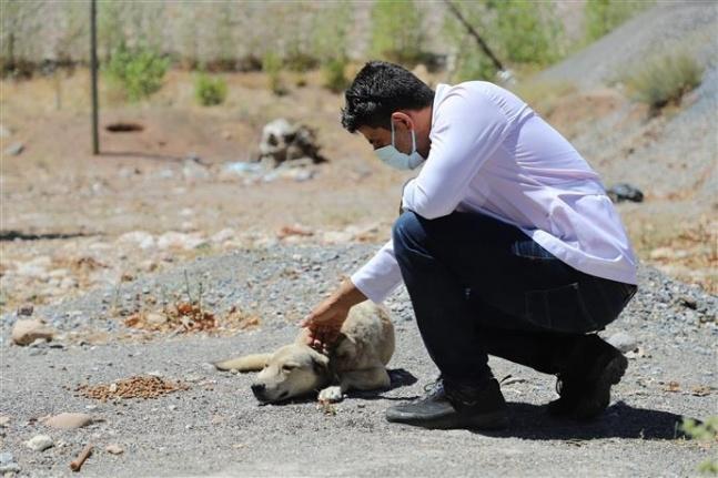 Alanya'da sokak hayvanları için yaylalarda hummalı çalışma