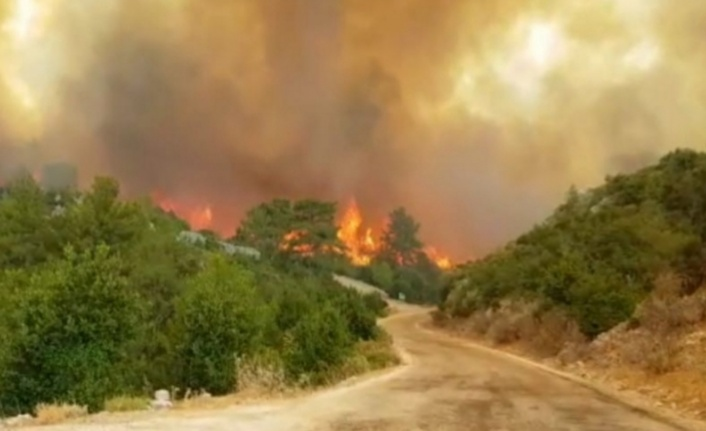 Alanya, Gündoğmuş, İbradı ve Akseki'de yangınlarda son durum